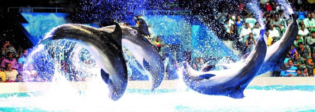 Местный дельфинарий