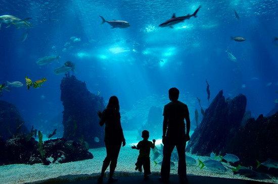 Океанариум в развлекательном центре Думан