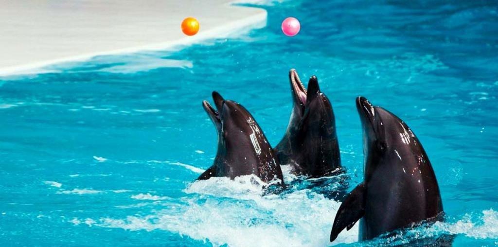 Дельфинарий адлер