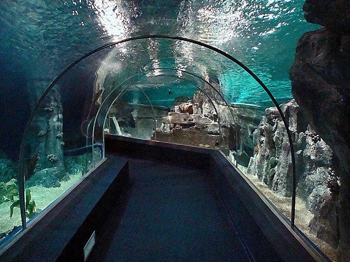 Адлер океанариум