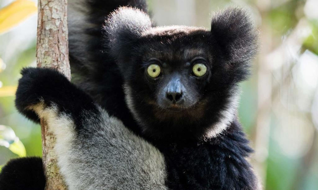 Эндемики Мадагаскара