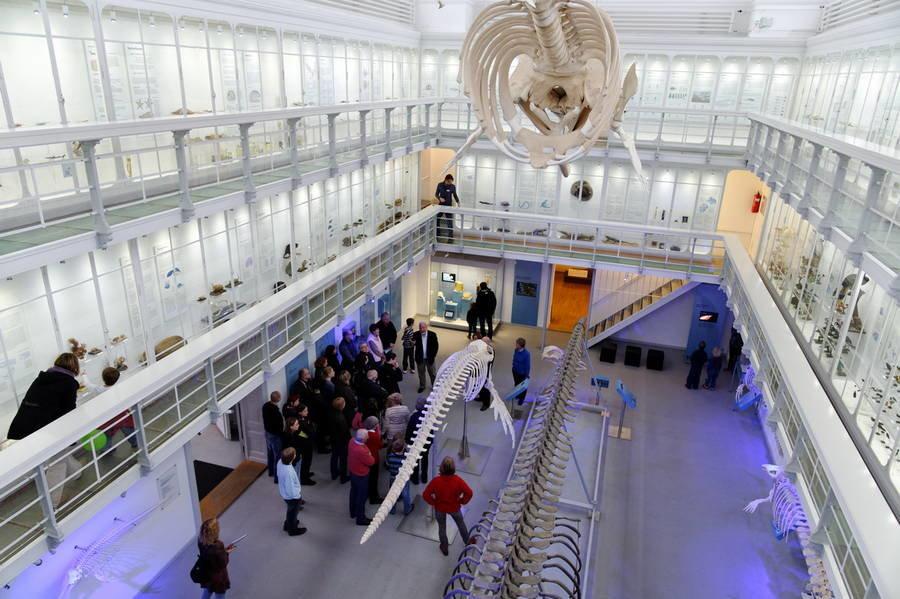 Скелеты динозавров в музее
