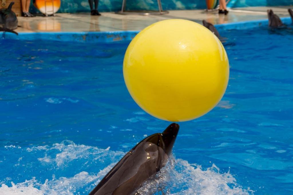 джемете дельфинарий