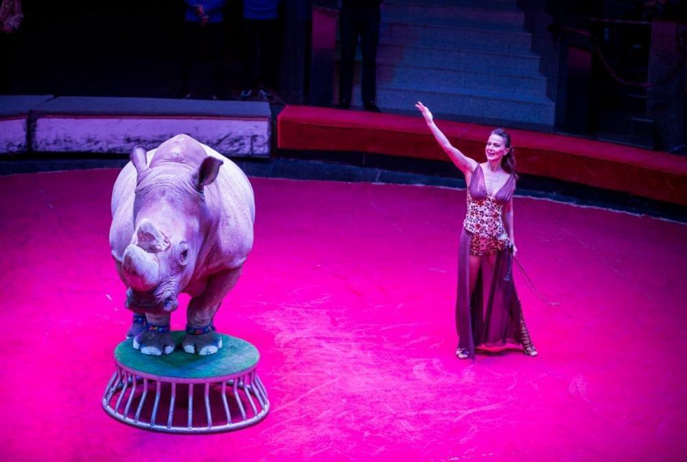 выступление носорога в цирке