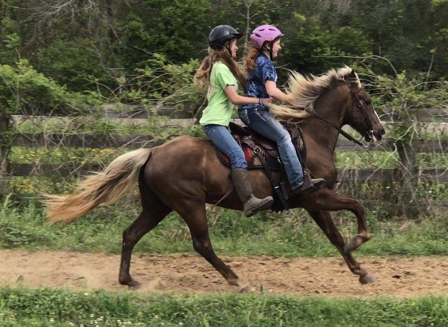 дети на конной прогулке