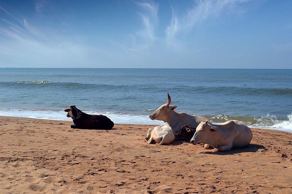 гоа пляж индия