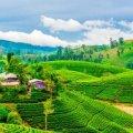 Курорты Шри-Ланки: куда лучше поехать, достопримечательности и отзывы