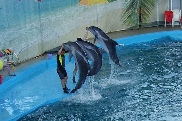 Лазаревское дельфинарий