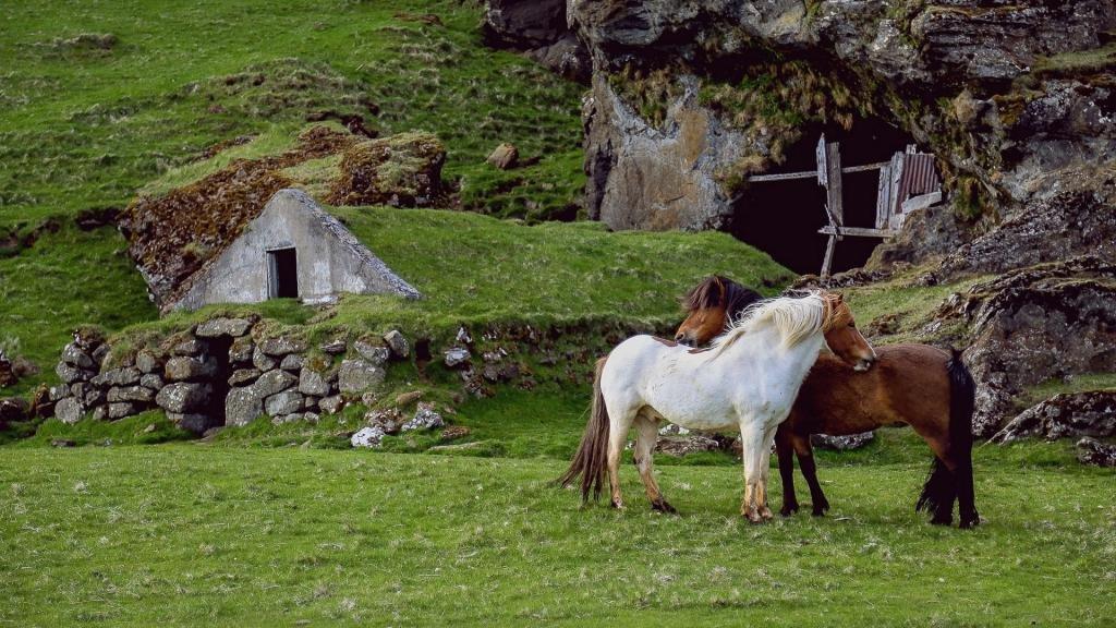 Две лошади на пастбище