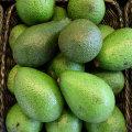 Как едят авокадо: как почистить, с чем сочетается, рецепты вкусных блюд