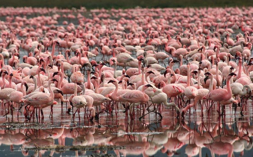 Фламинго на побережье страны
