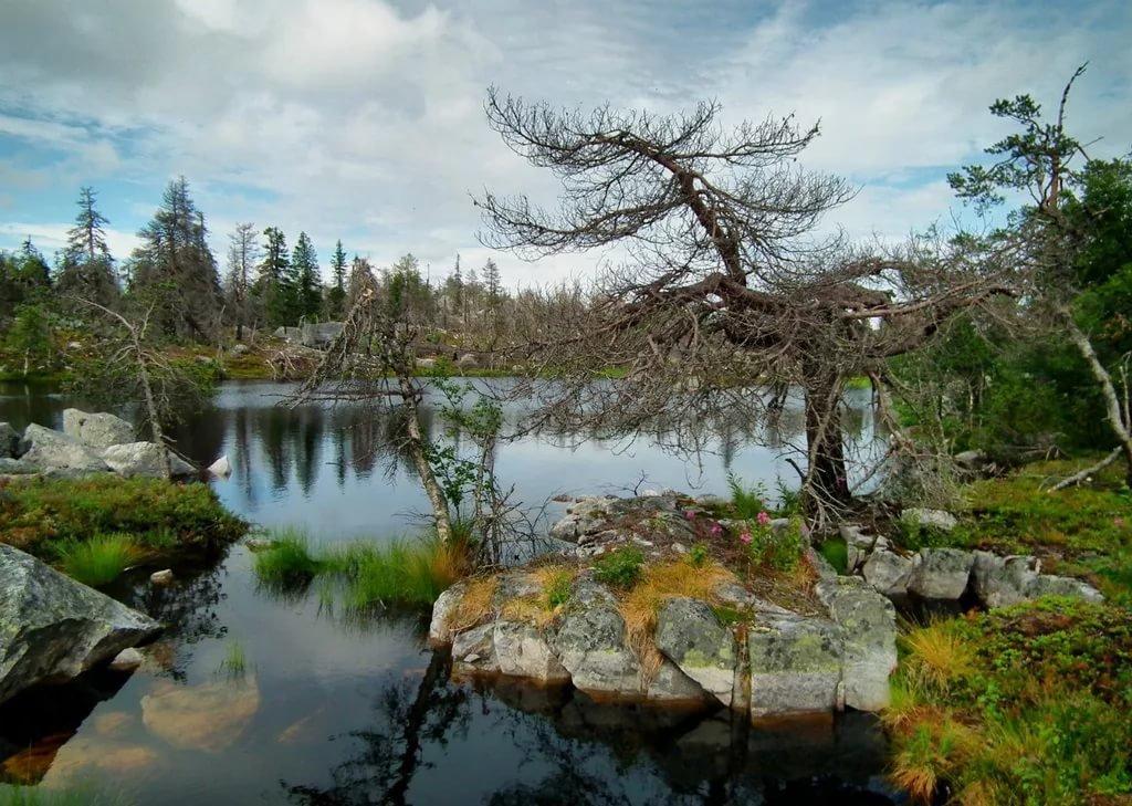 Природа в Карелии