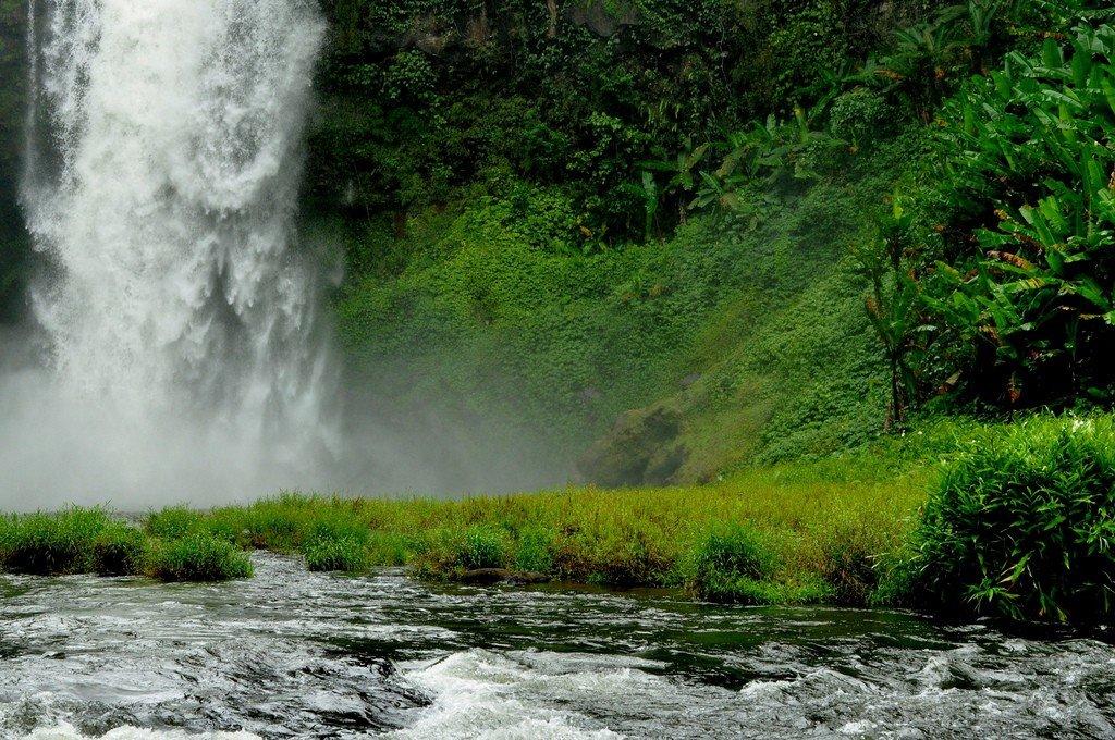 Лаос леса