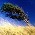 Куда дует ветер, как определить его направление
