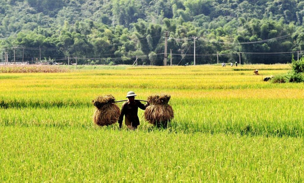 Вьетнам сентябрь погода