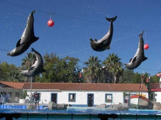 шоу дельфинов в лиссабонском зоопарке