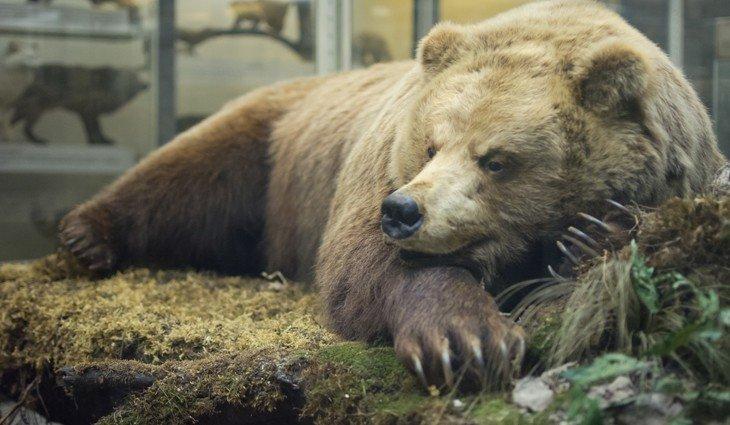 экспонат в Зоологическом музее
