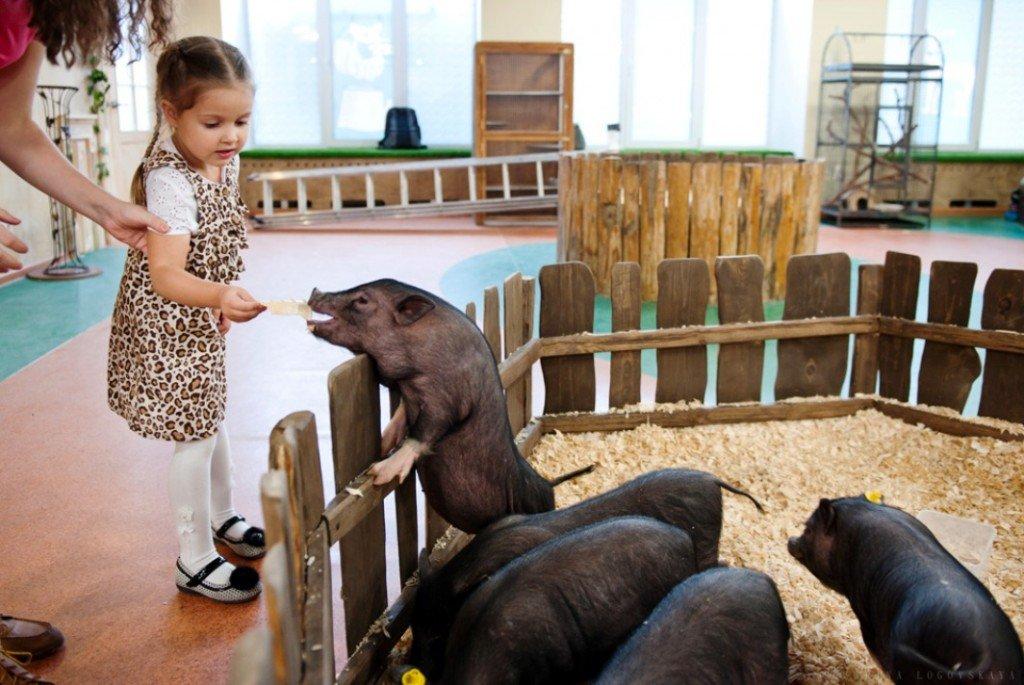 Контактный зоопарк в Гомеле