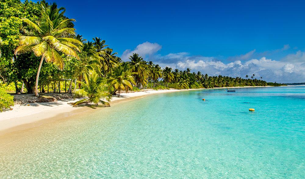 Пальмы растут вдоль пляжа