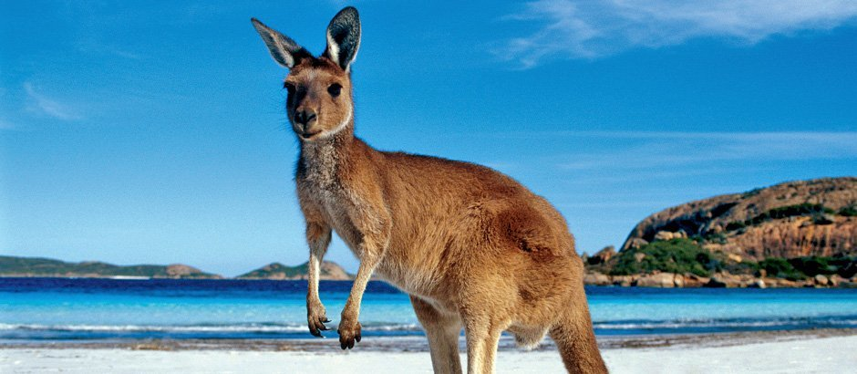 фото кенгуру