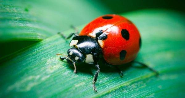 Красивое насекомое