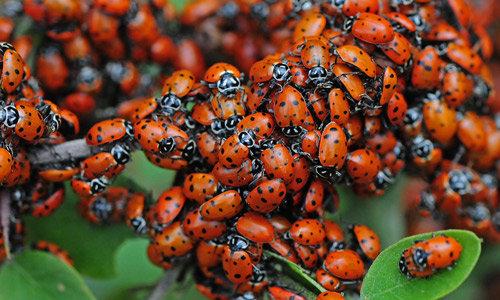 Стая насекомых
