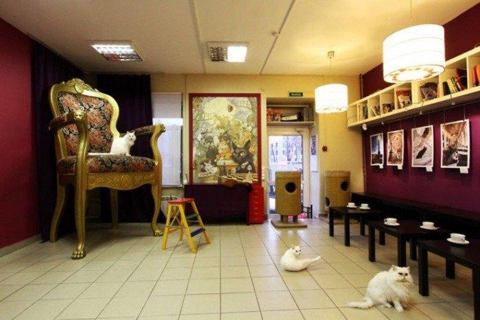 Музей кошки в СПб