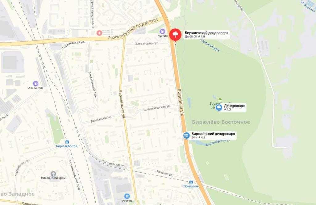 Дендропарк в Бирюлеве: место, которое стоит посетить