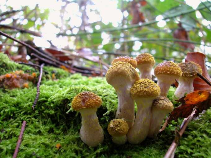 ❶ Как найти в лесу грибные и ягодные места