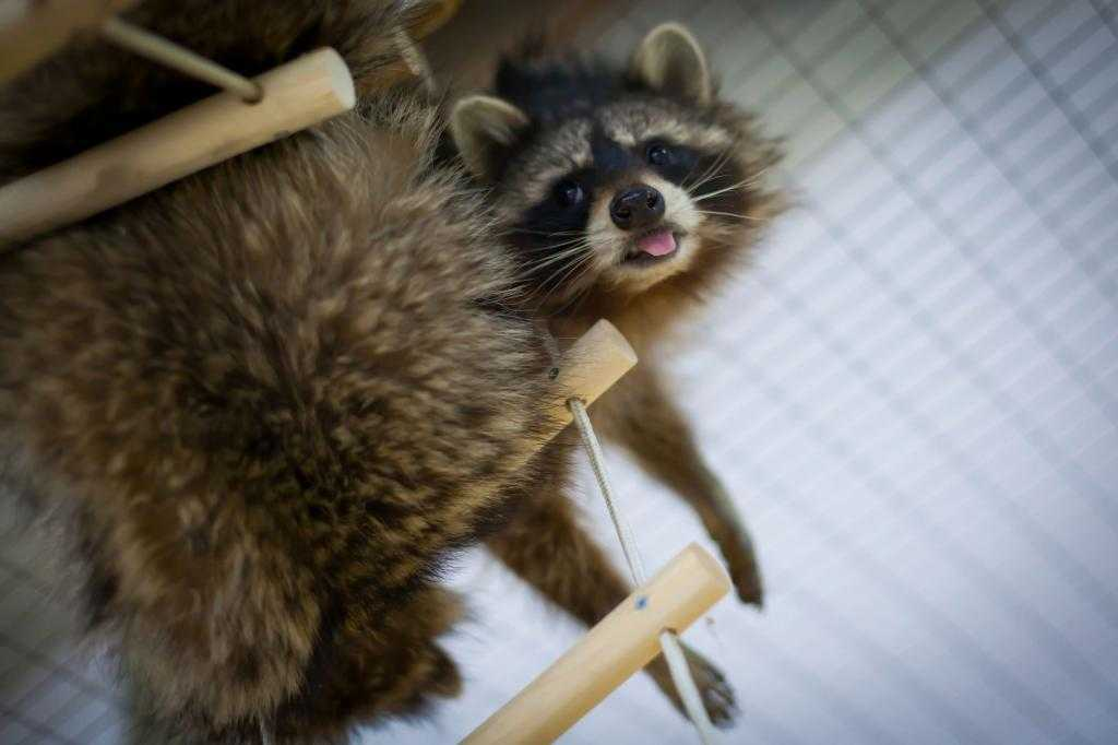 Контактный зоопарк в Новокузнецке: где и что можно увидеть