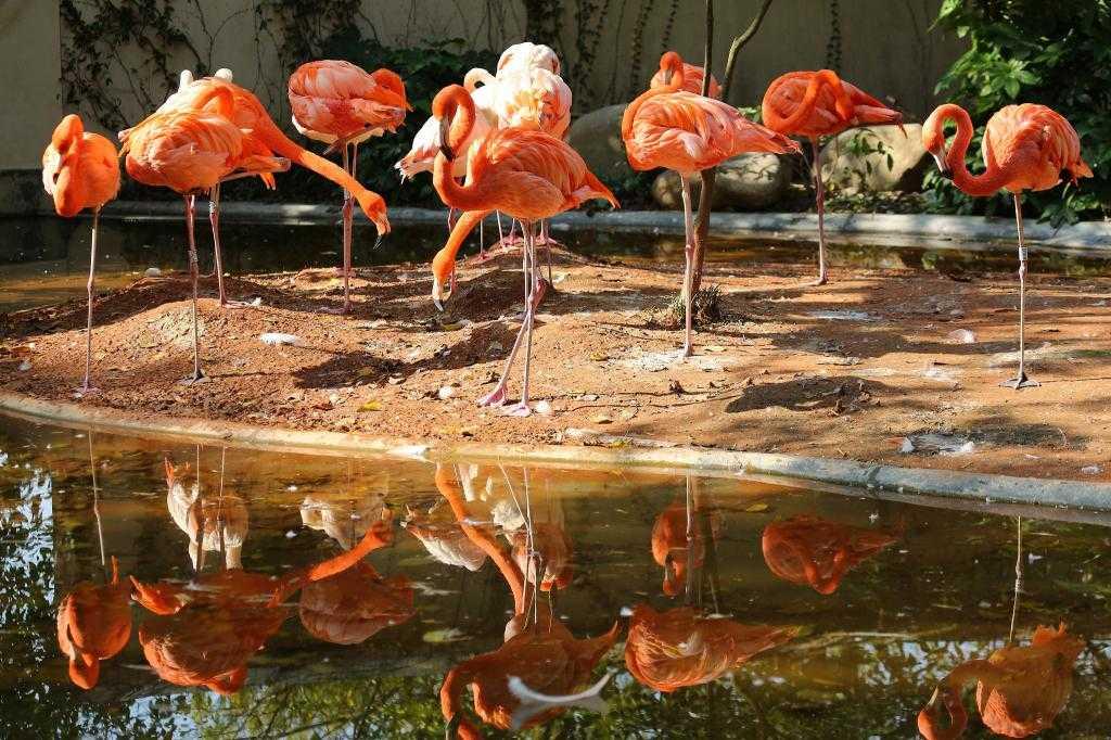 Шанхайский зоопарк: описание, фото, особенности, адрес